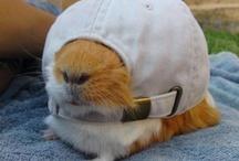 Cute!!! / by Laura Ewan