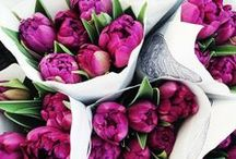 ✿ Flores ჱ / by Gabriella Laura