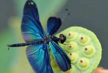 Natural / by Margaret Dauna
