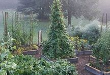 Growing Veges, herbs & fruit trees / by Walter Hall