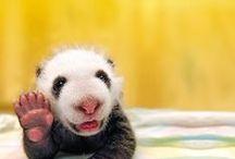 ANIMAL LOVER / They're soooo precious... / by VICKIE