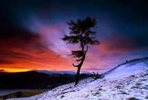trees / by Retha Venter