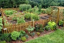 Farming Ideas & Tips / by Peggy Marchetti