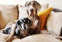 d o g   l o v e . /  - lovely, beautiful, cute, silly dogs. / by Malin Bakke