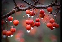 LOVE RAIN????? /   When I am silent, I have thunder hidden inside. ~Rumi   / by FAIRY HILL