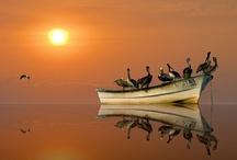 Sunset / Sunrise / Travel ... Beach, Nature, Sunset and Sunrise / by Barendina Bals