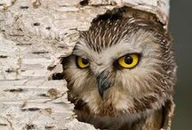 Owl ★ / by HIP in style