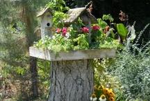 Garden / by Maria Cristina Arias Oddo