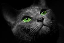 cats...... :D / <3 / by Deborah Wells