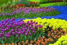 Gardens & Flowers / by Scarlett Litherland