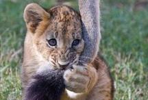 Wild animals / by Shirley DeChenne