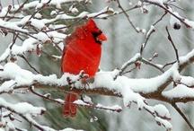 Winter Wonderland / by Shirley DeChenne