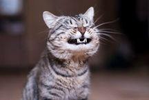 Cute!!! / by Shirley DeChenne