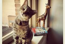 Oscar, the blind kitty / by Shirley DeChenne