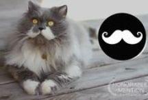 Owlbert, the mustache cat / by Shirley DeChenne