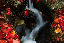 autumn / by Suzanne Hegstrom