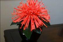 Kwiaty z bibuły i papieru / Flowers from tissue paper and paper / https://www.facebook.com/pages/Paper-Flowers-By-Kirilka/100447973428037 / by Wanda Zamojska