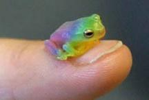 Frogs / by Valerie Manseau