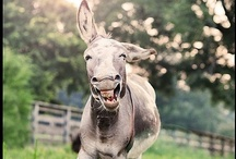 Check Out My Ass / by Donkey Britches