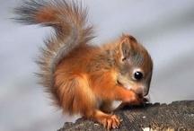 Squirrels, Chipmunks, etc... / by Valerie Manseau