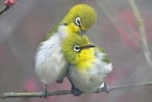 Birds / by Robyn Mink