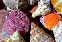 Shells / by Peggy Billings