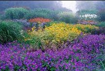 Flowers and Gardens / by Georgianne Barnett