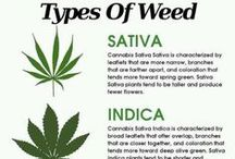 Cannabis Facts / The Truth Behind Cannabis #yeswecannabis / by YesWeCannabis