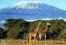 Kenya, Land Of Kilimanjaro. / This board shows the various scenery, wildlife and peoples of Kenya.  / by Steve Beairsto