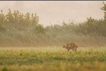 Jagtnyheder / Nyheder og artikler om jagt i Danmark fra Jægernes Magasin. / by Jægernes Magasin - Jagt i Danmark