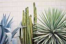 Plant Love / by Bridget