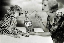 leopard / by Bridget