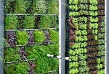 Projects: Gardening  / Gardening inside and outside.  / by Karen Lynne K.