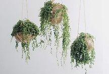 *・゜゚・*:plants/greenery*・゜゚・*: / by Phoebe Appleby