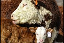Cattle, Horses & Pups / by Montana Stockgrowers Association