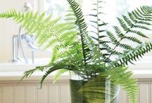 Decorating With Plants / by nb rh