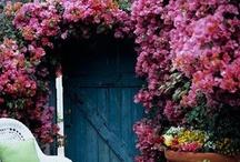 Beautiful Backyards / by andrea martinez