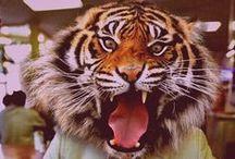 Tiger Rag / by Megan Treme
