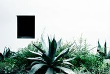 Garden Design / by Caleb Melchior