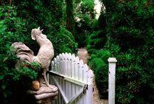 Garden / Green. Makes me happy.  / by jennifer benteu