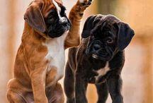 DOGS ❤️ Best Friends / by Vivet Desabah