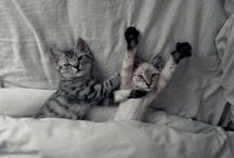 Gatos! Meow / by loren valdes