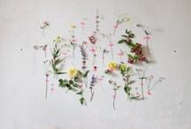 Art & Objects / by Emma Pile