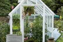 Greenhouse + Shed / by Lizzie Lynne
