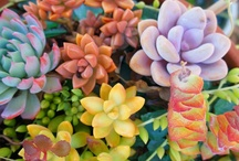 Succulents and Cactus / My. Most. Favorite. Ever! / by Leanne Patterson Porter