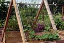 gardening / by Phyllis Dubois