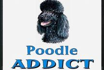Poodles Galore ❤️ / My Love for Poodles is rather large :) being the owner of two myself. Any kind of poodle will do!!! / by Emma Wentz