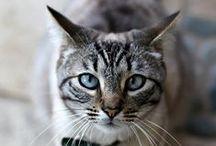 AMOROSOS GATITOS / Los gatitos los amo son todos hermosos y muy compañeros en especial los mios / by Azultraful