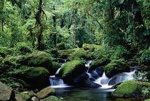Costa Rica, South America / by Mim Bullock