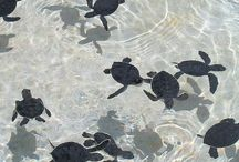 Cayman Islands / by Mim Bullock